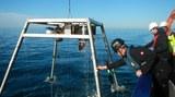 Messrahmen offshore 16-9 - Msc mar.jpg