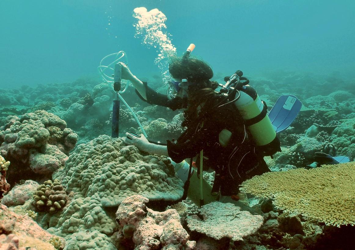 Taucher Korallen.jpg
